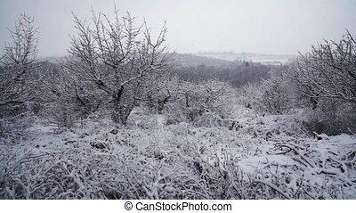 nature, arbre, tempête neige, hiver, beau, paysage, noël