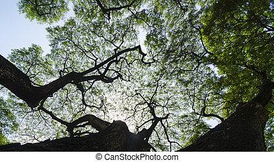 nature, arbres., lumière soleil, bois, forêt verte, backgrounds.