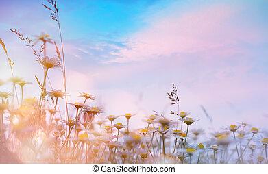 nature, art floral, coucher soleil, été, sur, arrière-plan;, pré