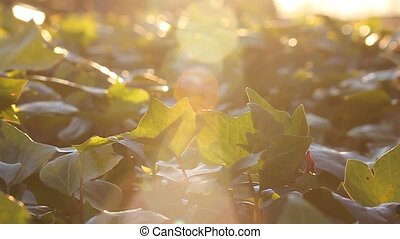 nature at dusk - reflections of the sun on an autumn...