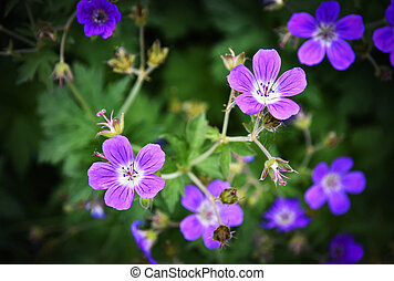 a group of purple small flowers