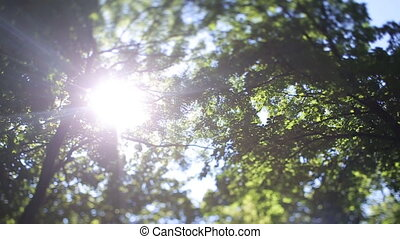 Nature background. Beautiful Sun shine through the blowing on wind tree green leaves. Blurred abstract bokeh with sun flare