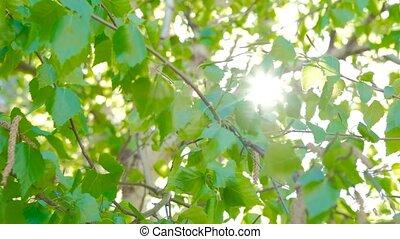 Nature background. Beautiful Sun shine through the...