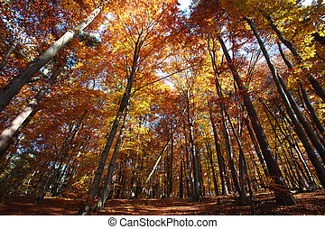 Nature background colorful autumn forest