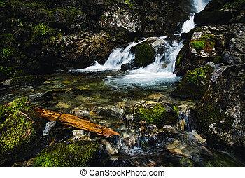 detail on a wild mountain stream