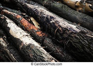 detail on a wood trunk dump