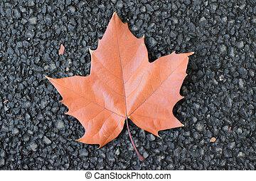 Fallen autumn brown maple leaf on road