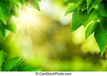 Scenic nature background of fresh lush green leaves with dewdrops, framing the out of focus vegetation with bekeh highlights and the sun, vibrant colors