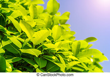 Nature background, Green leaf in spring, Spring season.