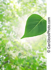 Green leaf on background with nice blossoming tree at spring