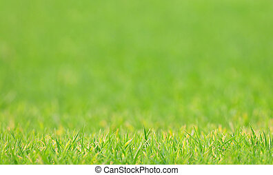 Nature background - lawn with blurred background - Photo of...