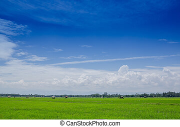 nature background of blue sky with cloud in the daytime and green rice field