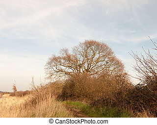 nature background tree with reeds and sky spring side of bank