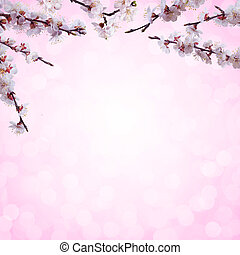 Nature background with apricot flowers