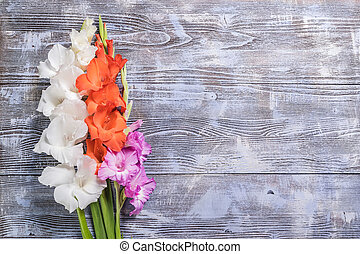 Nature Background with Beautiful Flowers