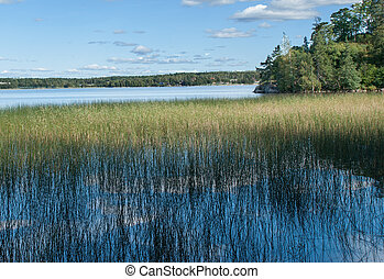 Nature background with coastal reed and shining lake water -...
