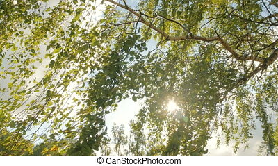 Nature background with foliage