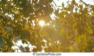 Nature background with foliage and sun lens flares at sunset...