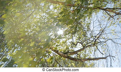 Nature background with foliage and sun lens flares
