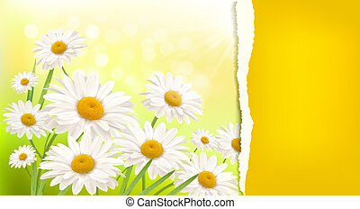 Nature background with fresh daisy and ripped paper illustration