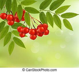 Nature background with green fresh leaves and rowan. Vector illustration.
