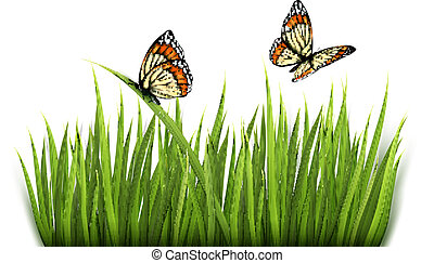 Nature background with green grass and butterflies Vector.