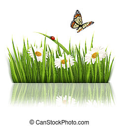 Nature background with green grass and flowers Vector.