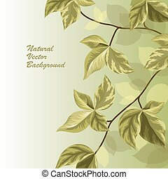 Nature background with green leaves .