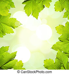 Nature Background with maple leaves