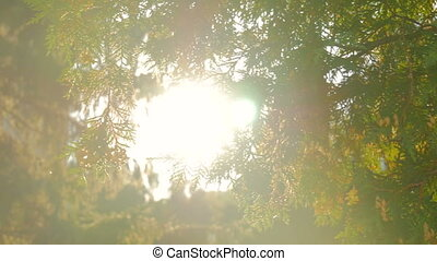 Nature background with sun lens flares - Nature background...
