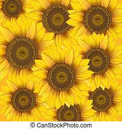 Nature background with sunflowers.