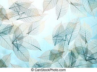 Nature background with transparent skeleton leaves