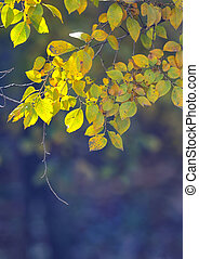 Nature background with yellow leaves