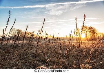 Nature Backgrounds, Winterlandscape with evening primrose seedpods and sunrise
