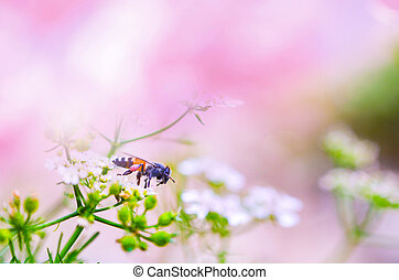 nature, barbouillage, fond, rose, résumé, été, pourpre, clair, /
