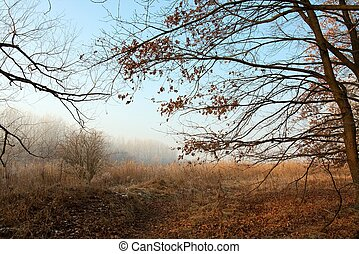 Bare forest in late autumn, misty weather