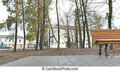 nature bench autumn park path landscape pavement