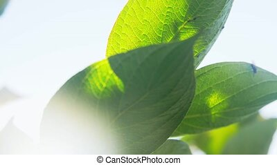 close up of hydrangea branch with fly on leaf - nature, ...