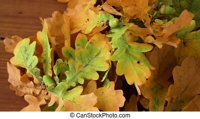 oak leaves in autumn colors on wooden table - nature, botany...