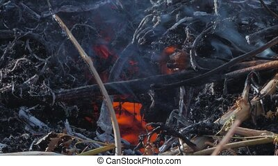Nature burns, bushes, tree branches, green grass, dry reeds burns with a powerful flame in a fraction of a second, dark blue balls of smoke rise. The concept of summer fires, nature in danger, dark yellow, black and gray smoke.