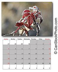 nature calendar december
