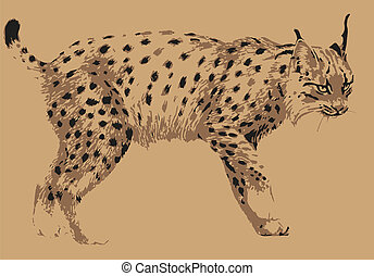nature - carnivorous mammal lynx