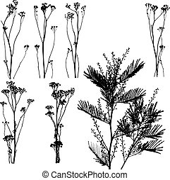 Nature Catalog I - Lot of herbs and leaves silhouettes ready...