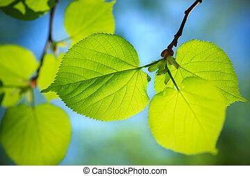 nature close-up - Selective soft focus on nearest part....