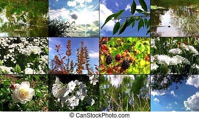 nature, collage