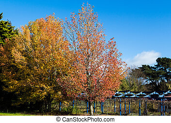 Nature Colors - Group of trees with the front tree showing...