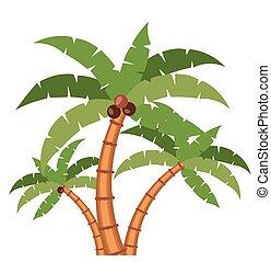 nature, conception, palmier