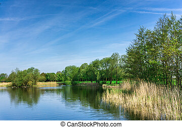 Nature conservation area with trees a small lake at sunshine and blue sky