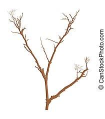 Nature Dead Tree