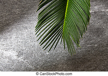 green moist palm tree leaf - nature, eco and flora concept...